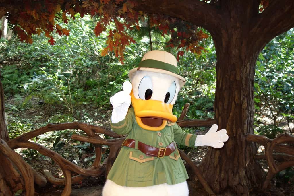 Walt Disney World, Animal Kingdom Characters, Donald Duck
