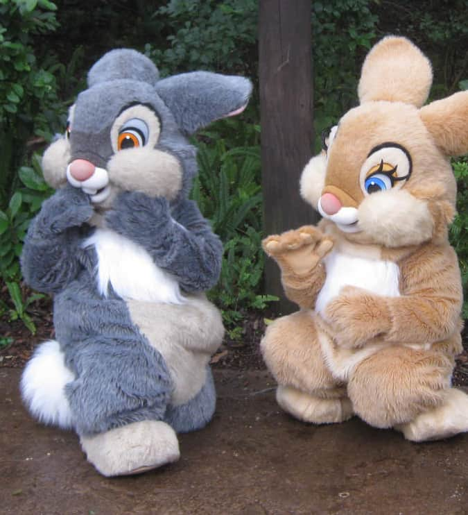 Thumper and Bunny 2011