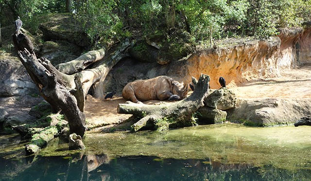 Questions and answers concerning Jungle Book, Safaris and Everest Fastpass+ with later operating hours