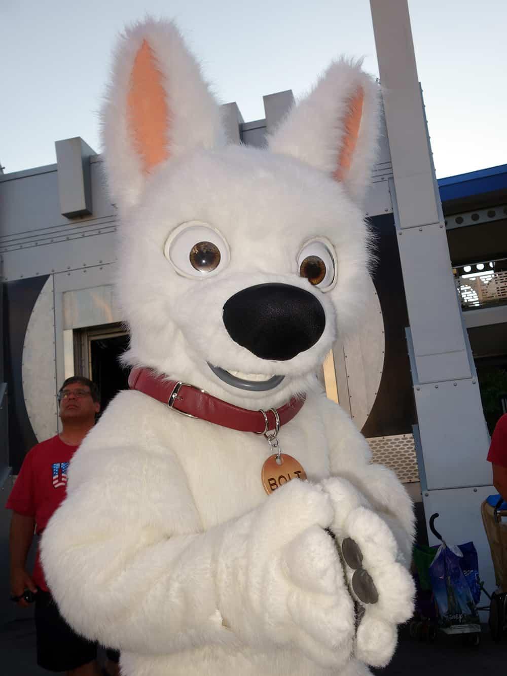 Bolt Dog Days of Summer 2013