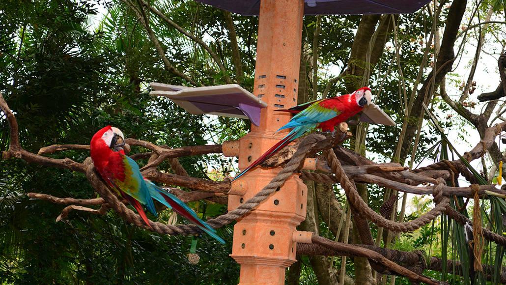 Walt Disney World, Animal Kingdom, Character Changes, January 2014, Macaws