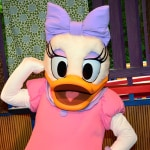 Daisy Duck preening for the camera at Animal Kingdom