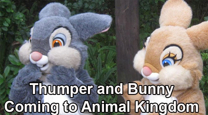 Thumper and Miss Bunny offering special meet at Disney's Animal Kingdom