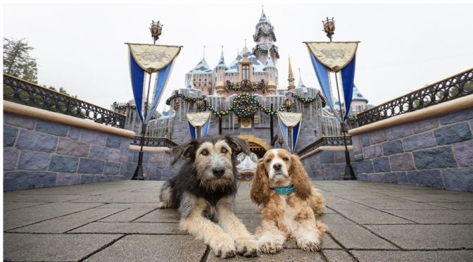 """""""Lady and the Tramp"""" Disney+ Canine Stars have a Playdate at Disneyland!"""