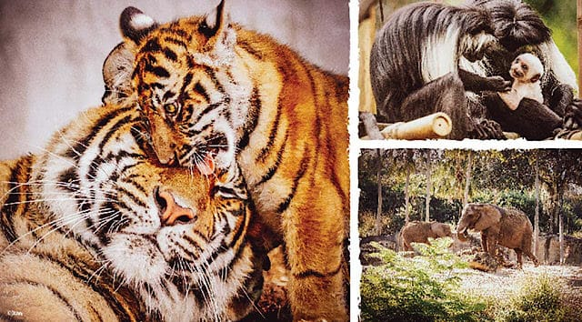 Cool Facts and a Behind-the-Scenes Look at Disney World Animals