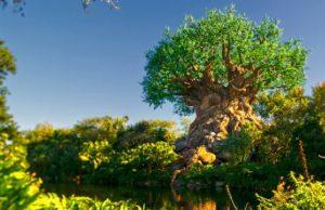 Disney's Animal Kingdom Reaches Disney Park Pass Capacity For Upcoming Date