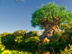 Rumor: Disney Will Not Allow Guests To Park Hop With New Park Reservation System