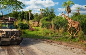 Guests Allowed to Remove Masks on Kilimanjaro Safari