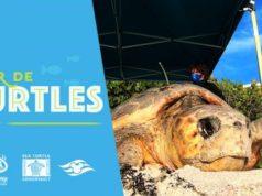 Follow Kermit and Miss Piggy in the Tour de Turtles