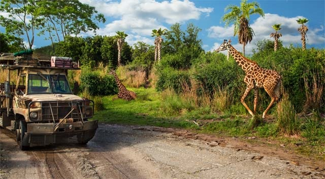 New Babies are on the Way to Animal Kingdom