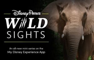 """New Way to Explore """"Disney Parks Wild Sights"""" from Home"""