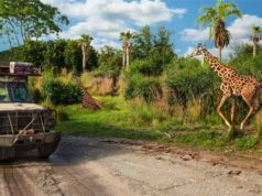 A Brand New Baby Giraffe is Born in Disney World