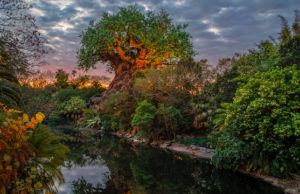 New Animal Kingdom Dining Location Updates