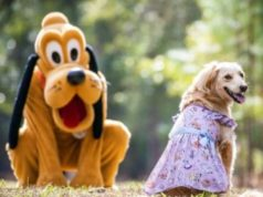 Disney Cats and Dogs Fans will Love this New Collection