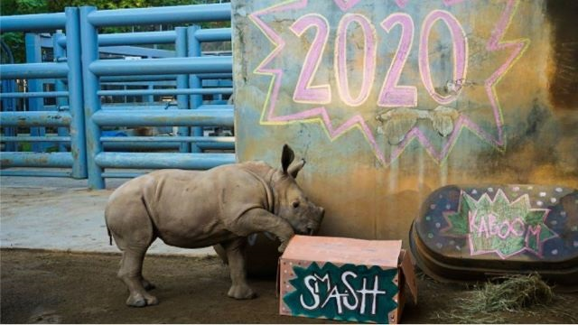 Disney Releases a New Video of the Animals Bidding 2020 Adieu