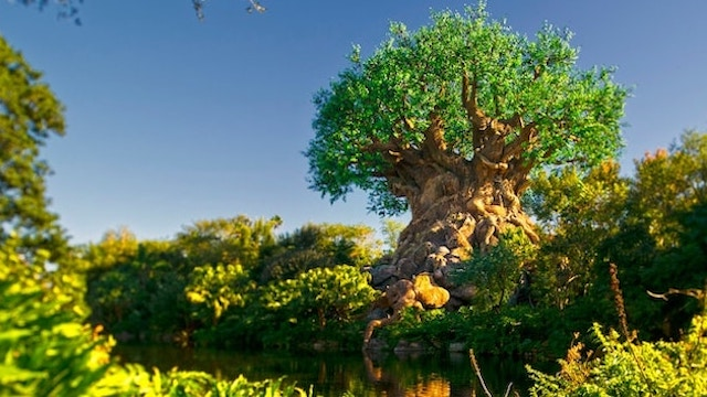 Limited Time Experience Now at the Animal Kingdom