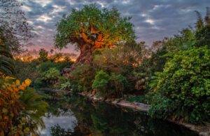 New Park Pass Availability Magically Opens up at Disney World