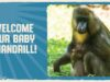 Disney's Animal Kingdom Welcomes New Baby Mandrill