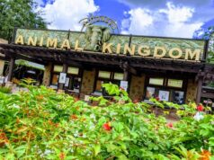 An Animal Kingdom attraction is now using a backstage queue