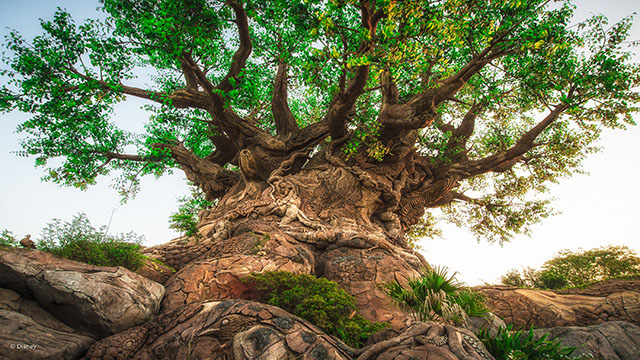 Major Power Outage Causes Delays at Disney's Animal Kingdom