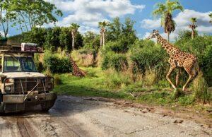 Photos: Kilimanjaro Safaris is being refurbished and something big is missing
