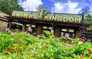 What is Rope Drop like now at Disney's Animal Kingdom?