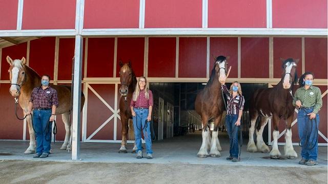 Meet Disney's 5 Beautiful New Horses